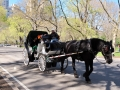 Horsedrawn - New York City April 2012 Central Park
