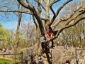 Climbing - New York City April 2012 Central Park