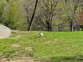 Meandering - New York City April 2012 Central Park